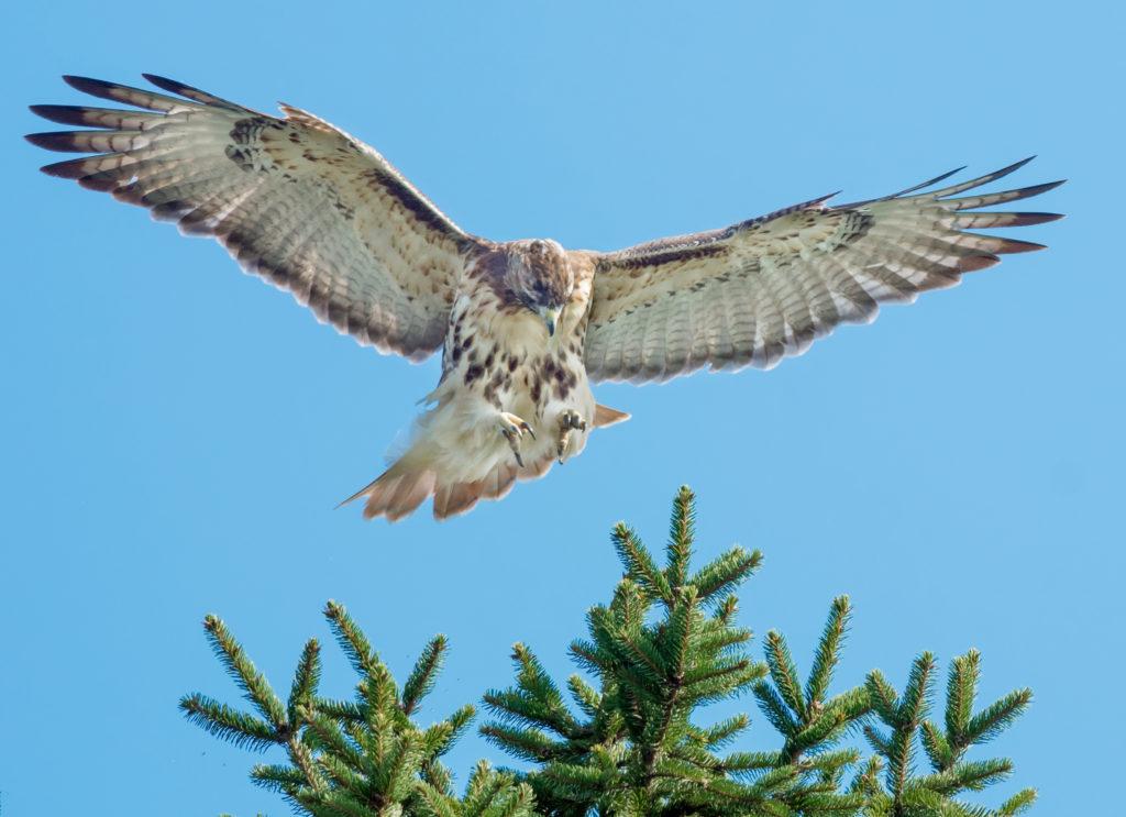 Landmark Genome Study Recasts Evolutionary History of Birds