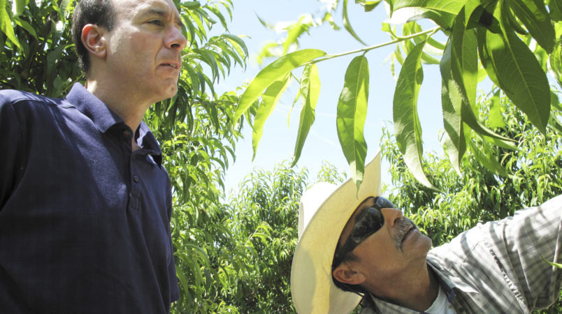 FILE - In this April 29, 2014 file photo, Dan Gerawan, owner of Gerawan Farming, Inc., left, talks with crew boss Jose Cabello in a nectarine orchard near Sanger, Calif. The Agricultural Labor Relations Board late Friday, April 15, 2016 unanimously affirmed an administrative law judge's earlier decision in favor of the United Farm Workers in a decades-long fight with Gerawan Farming Inc., one of the nation's largest fruit growers. The board supported the judge's ruling that the company interfered with its employees' vote on whether to reject union representation. (AP Photo/Scott Smith, File)