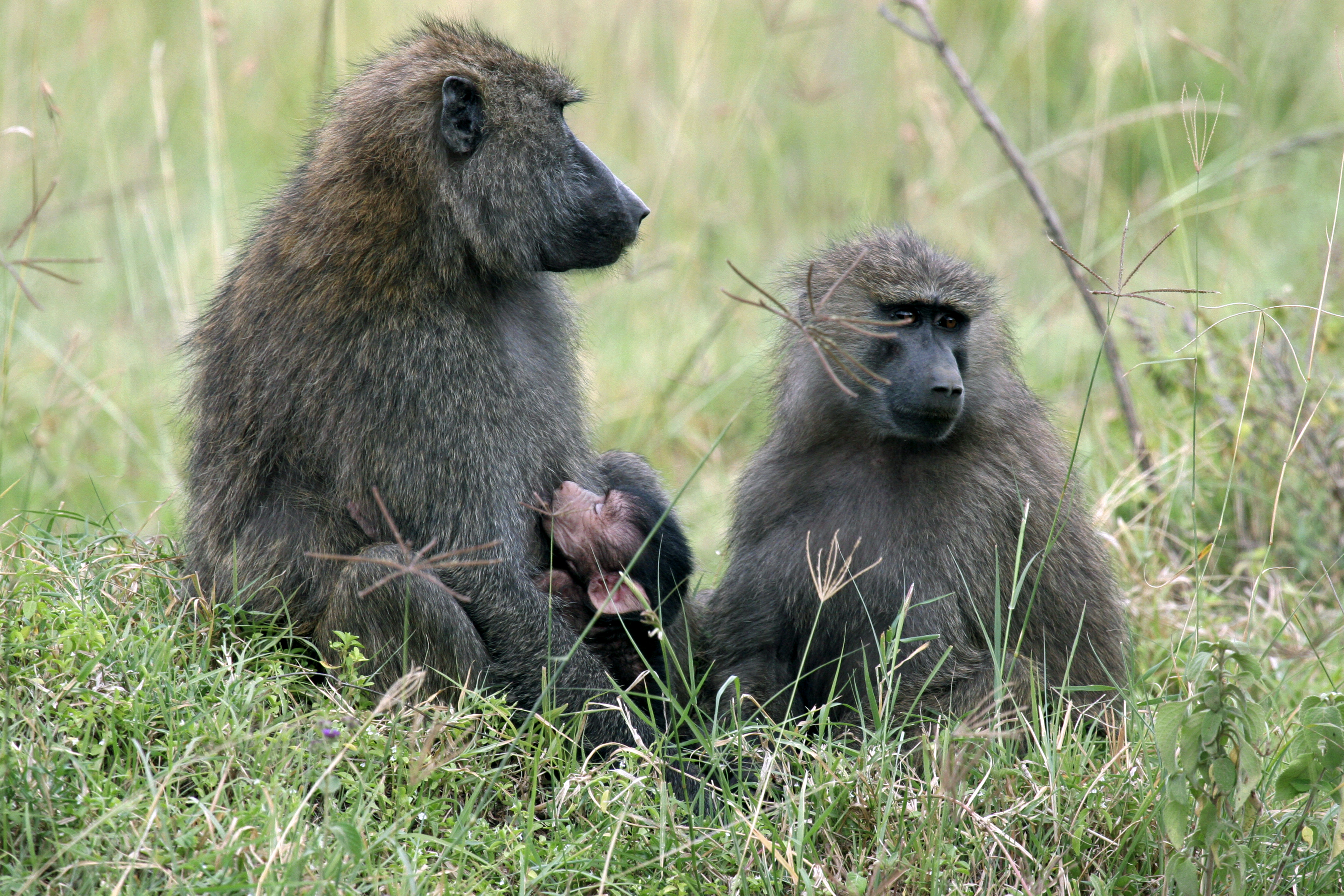 photo image Idaho Wildlife Official Resigns After Backlash For Killing Baboon Family