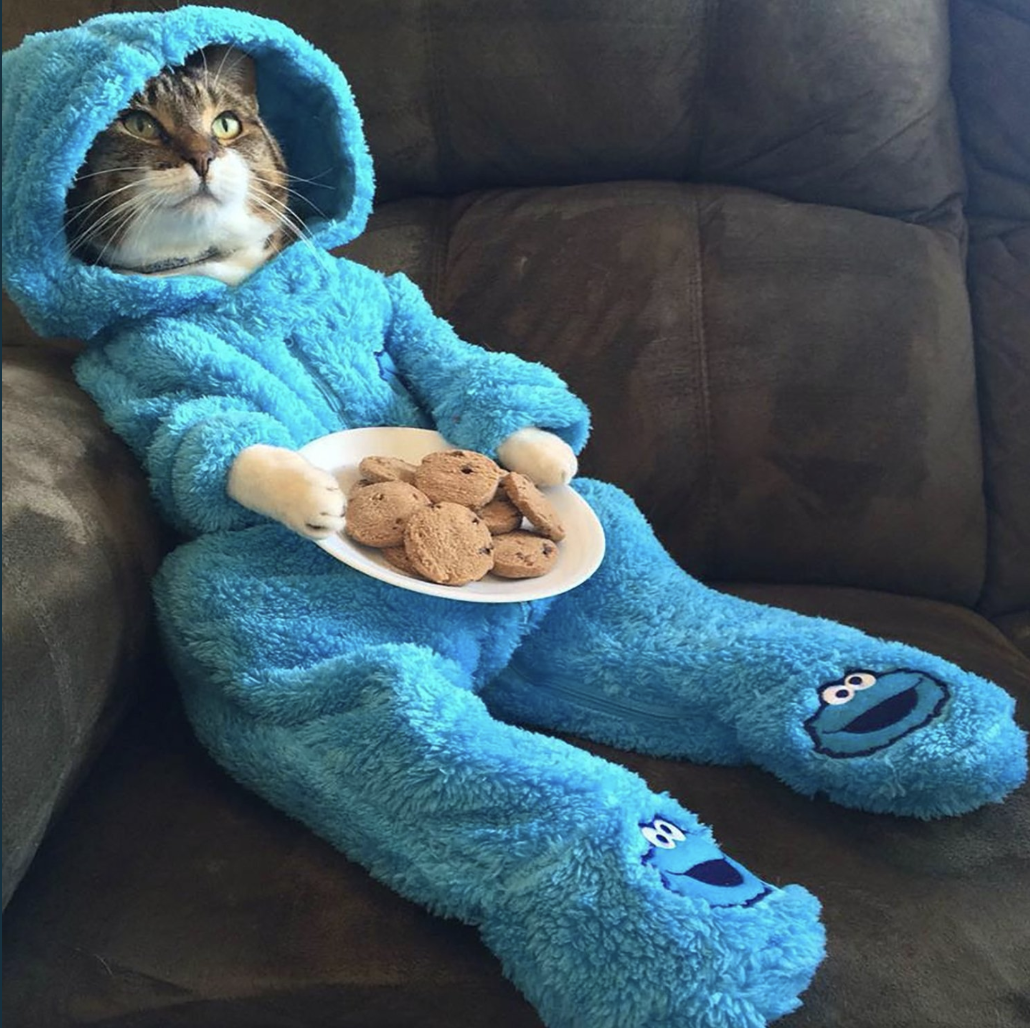 US Embassy Apologizes For 'Cat Pajama-Jam' Email Let Out Of The Bag